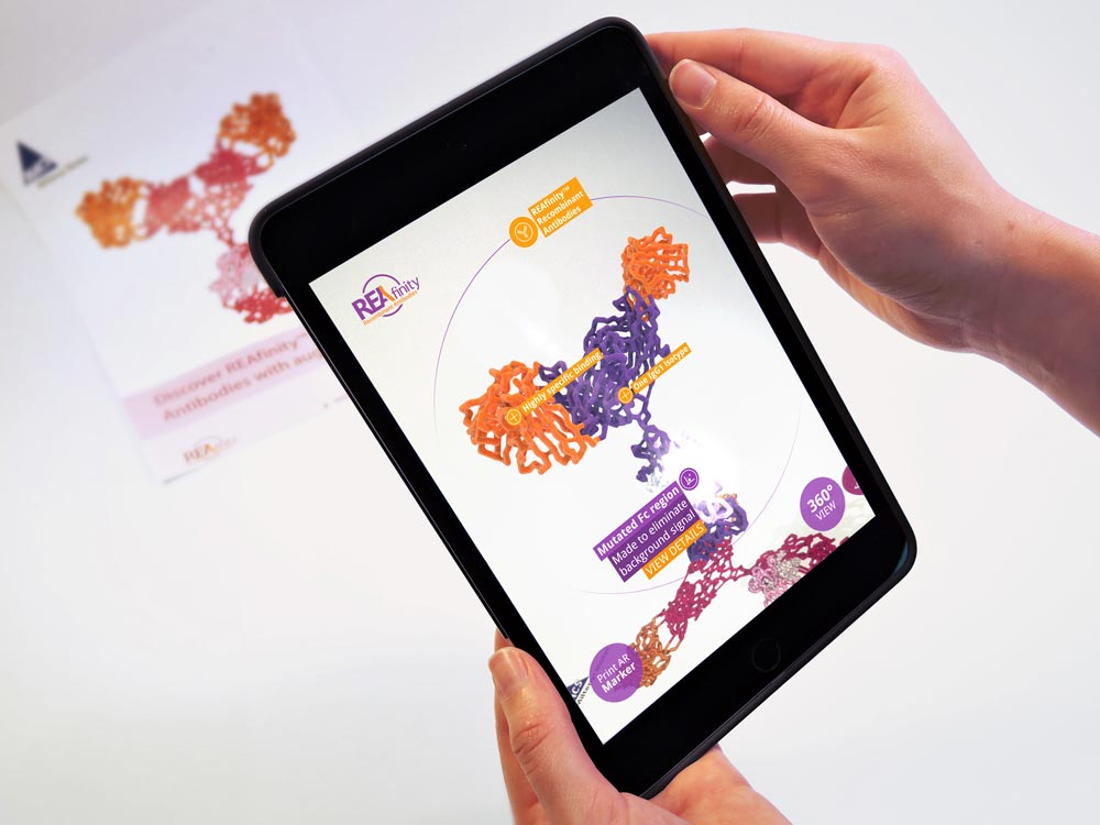 AR app on I-pad provides more information on antibody model